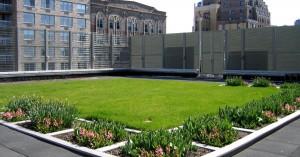 zielony-dach01