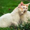 koty-na-trawie